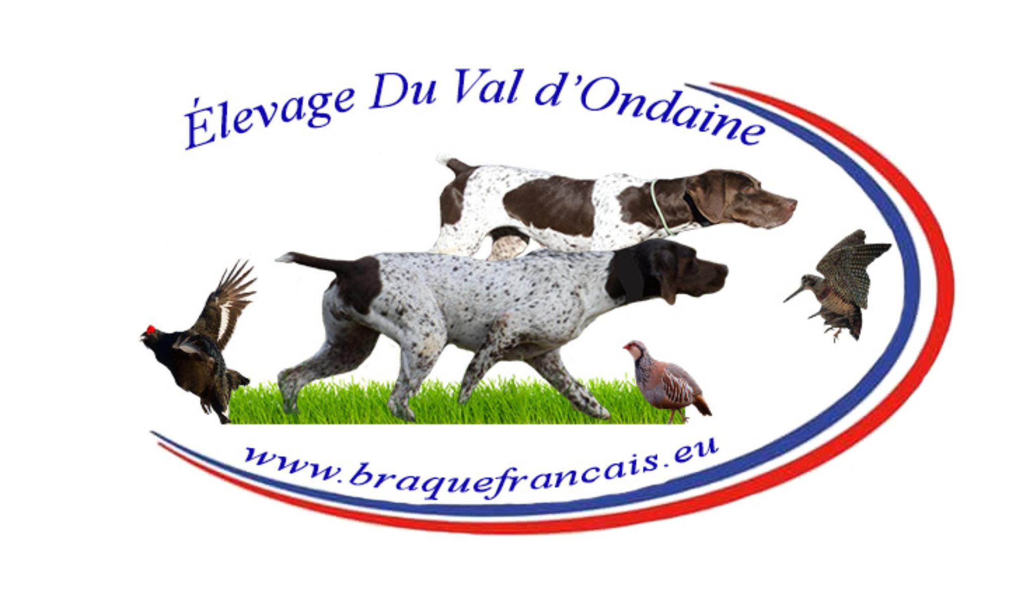 Braque Français Type Pyrénées